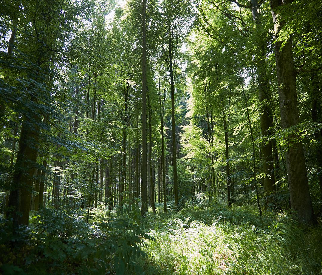 løvskov.jpg